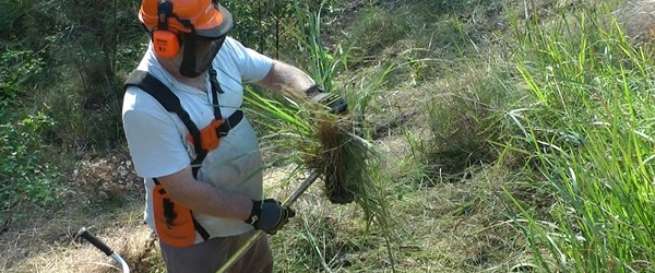 Clearing brush cutter head of fouled grass